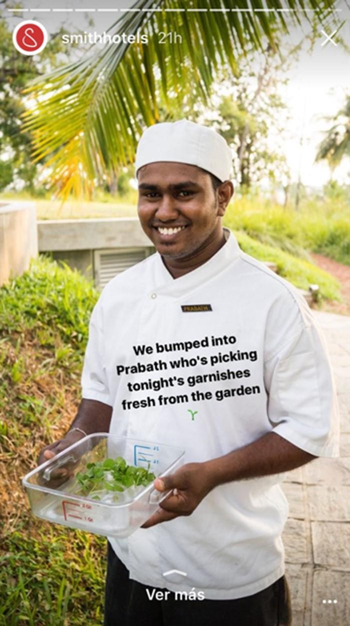 chef of a hotel restaurant picking garnishes