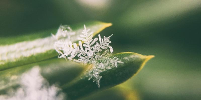 Μια κοντινή φωτογραφία μιας νιφάδας χιονιού