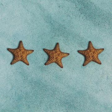 Drei Seesterne auf dem Meeresboden, die wie Hotelsterne aussehen
